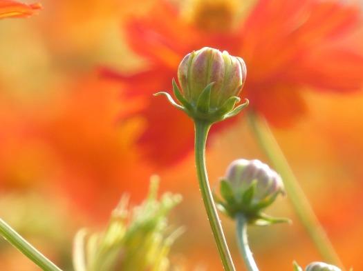 flower-2140061_1920