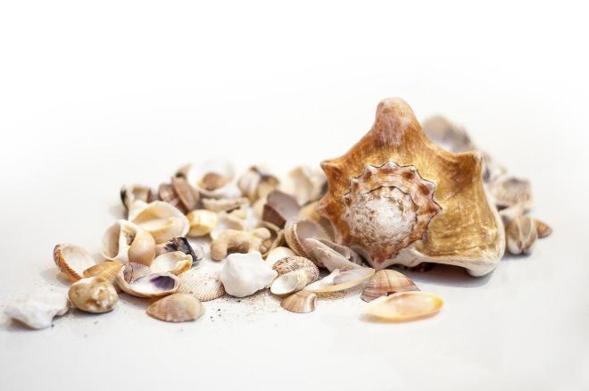 shell-2460434_1920
